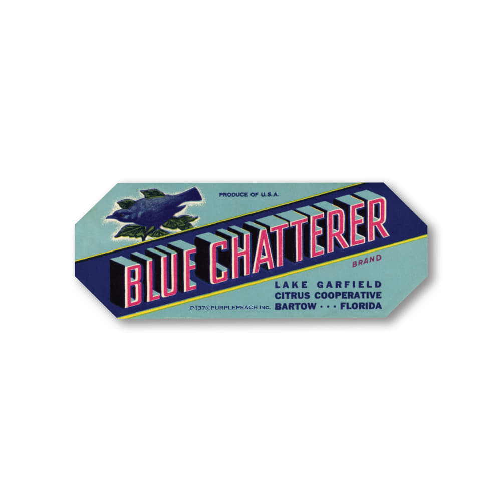 Blue Chatterer