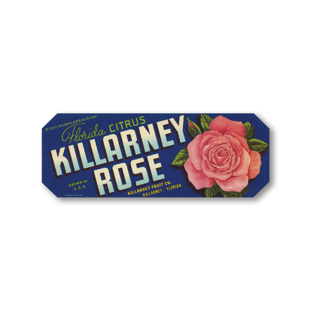 Killarney Rose